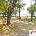 Amerindian Grove