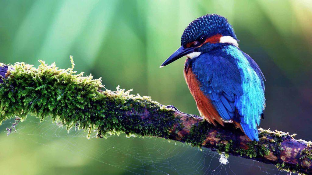 birds-of-paradise island